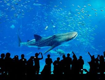 美ら海GO!日帰りバスツアー(沖縄美ら海水族館滞在約3時間+御菓子御殿)【Bコース/入館券付き/那覇発着】