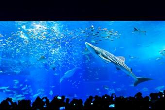 美ら海GO!日帰りバスツアー(沖縄美ら海水族館&エメラルドビーチで海水浴♪滞在約7時間)【よくばりコース/入館券付き/那覇発着】